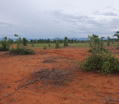 Đất xã Hòa Thắng, huyện Bắc Bình, Bình Thuận. 11ha, giá 60.000 đồng/m2