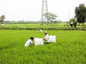 Cho thuê đất nông nghiệp ở Bình Thuận: Làm sao để hiệu quả