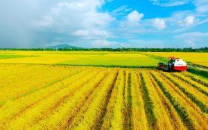 Những Quy Định Về Tách Thửa Đất Nông Nghiệp